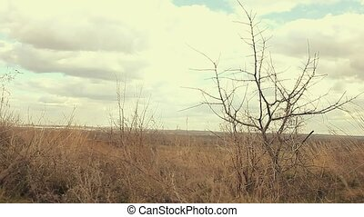 macro dry wood large branch bud pear landscape silhouette...