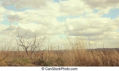 dry grass landscape sways in wind movement nature - dry...