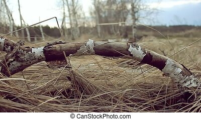 birch dry tree branch grass nature landscape - birch dry...