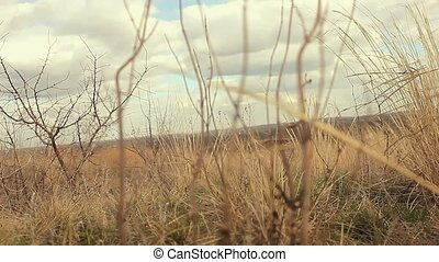 dry grass sways in the wind landscape movement nature - dry...