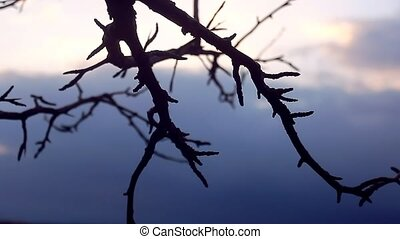 macro large branch bud pear landscape silhouette nature...