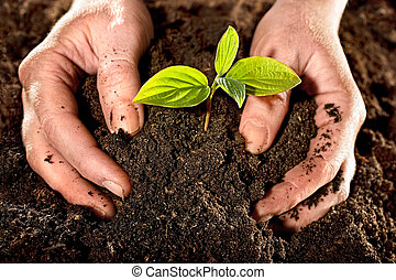 new life - Farmer hands holding a fresh young plant. New...