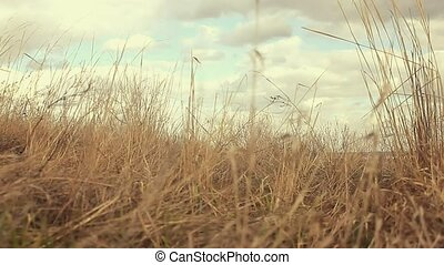 dry landscape grass sways in wind movement nature - dry...