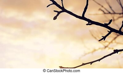 large macro branch bud landscape pear silhouette sunset...
