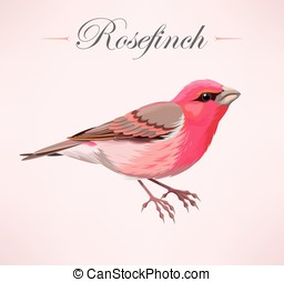 Illustration of pink bird - Vecror illustration of high...