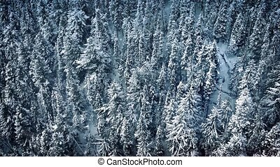 Flight Past Forest In Snowfall
