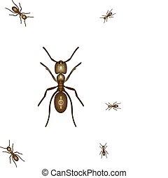 Killer Ant - Illustration of an ant