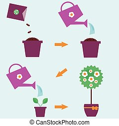 How to grow a plant instructions