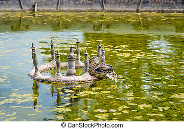 Goose in the Pond of Audley End House in Essex in England It...