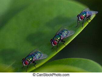 queue of fly creeping on the green leaf
