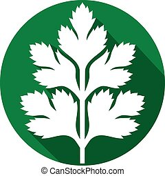 Flat leaf parsley Clipart Vector and Illustration. 130 Flat leaf parsley clip art ...