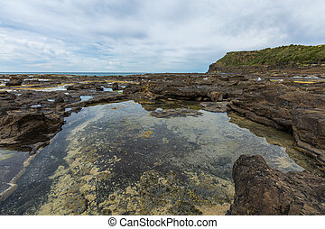 Curio Bay, the Catlins New Zealand - Curio Bay, an ancient...