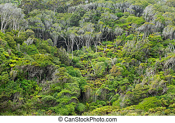 Native bush of New Zealand