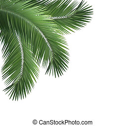 Green palm leaf frame isolated