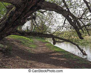 River Po in Turin - Banks of Fiume Po meaning River Po in...