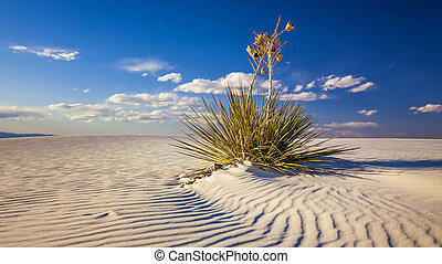 Yucca Plant on Sand Dune at White Sands National Monument -...