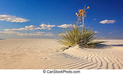 arena, Duna, y, Yuca, en, blanco, arenas, nacional,...