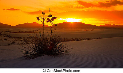 White Sands National Monument Sunset, New Mexico - A...