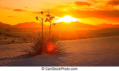 White Sands National Monument Sunset, New Mexico