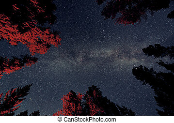 Banff National Park - Milky Way in forest in Banff National...