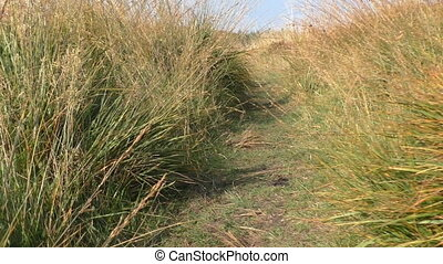 Walking through tall grass - Walking countryside path...
