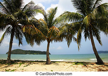 Beach Langkawi - Beach in a sunny day. Island Langkawi....