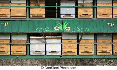 bee hive agriculture