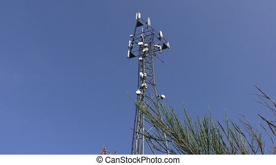 Telecommunications tower and shrub - Low angle view of...