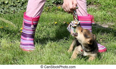 child and puppy play with rope