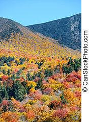 White Mountain - Colorful Autumn foliage in White Mountain,...