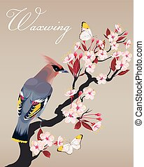 Waxwing on the cherry branch - Vector illustration of...