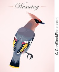 Cedar waxwing illustration - Vector illustration of high...
