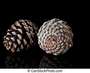 Pine cones on black, reflected. Fibonacci. - Large cones,...