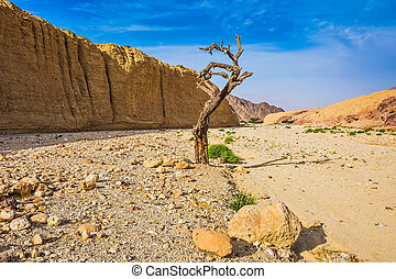 The desert in neighborhood of sea resort Eilat - The stone...