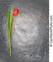 Ped spring tulip on shabby grey grunge stone background, top...