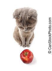 cat apples - cat find apples isolated on white