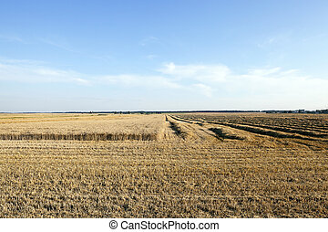cereal harvest field - Agricultural field on which is...