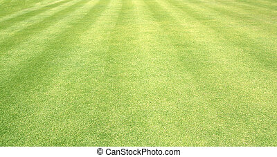 Golf Courses green lawn pattern textured background.