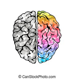 Creative concept of the human brain. Left and right side....