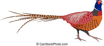 Vector Illustration of a Pheasant - Vector Illustration of...