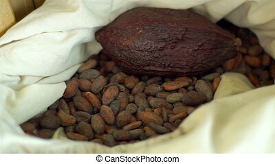 Handheld Bag with Cacao Seeds - Handheld close up shot of a...