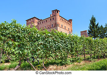 Vineyards of Grinzane Cavour in Italy. - Green vineyards and...