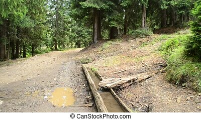 Spring with drinking trough for animals in forest in mountains