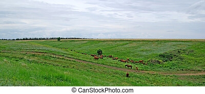 Horses herd in steppe. Animal wildlife landscape.