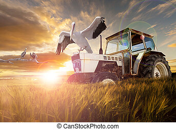 Rural world and travel concept - Wheat fields, exotic birds...