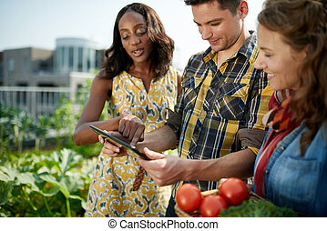 Friendly team harvesting fresh vegetables from the rooftop...