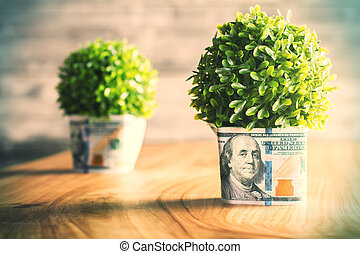 Dollar plants - Plants with dollar bills around the pots on...