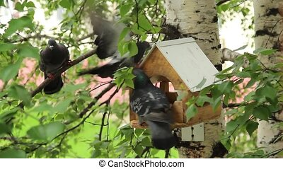 Pigeons around bird feeders - Birds feeding trough attached...