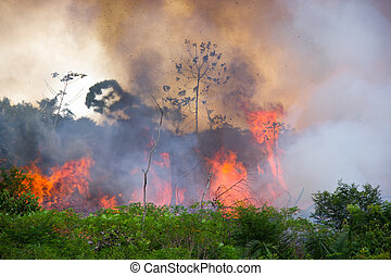 Brazilian Amazon Burning - Brazilian Amazon Forest burning...