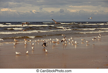 Seagulls on the sea coast